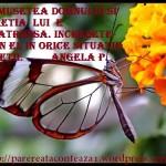 Minunea nasterii unui fluture (video pentru copii)