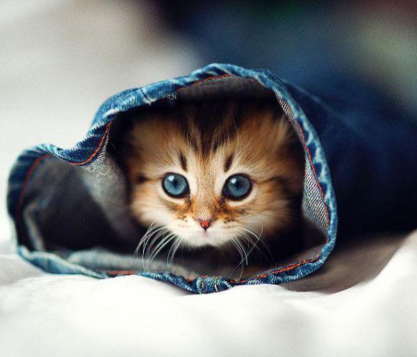 pisica,nice cat