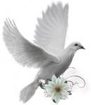 porumbel,porumbelul pacii