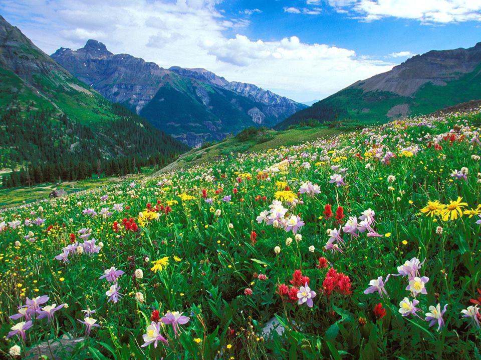 imagini natura