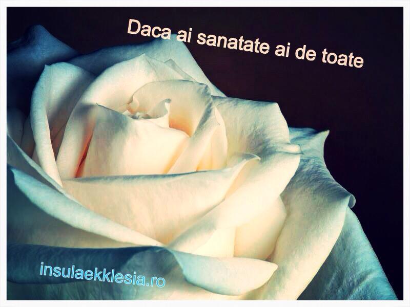 sanatate,trandafir