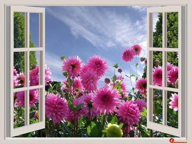 primavara,fereastra deschisa
