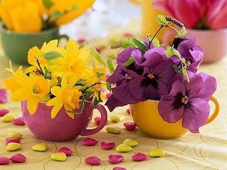 imagini flori,primavara