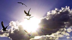 cer,pasari,libertate